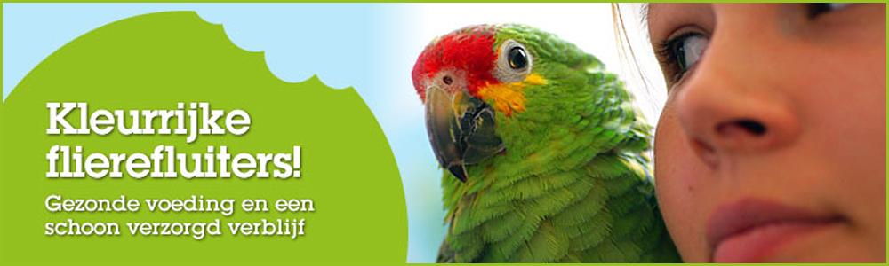 hoofdfoto-vogels